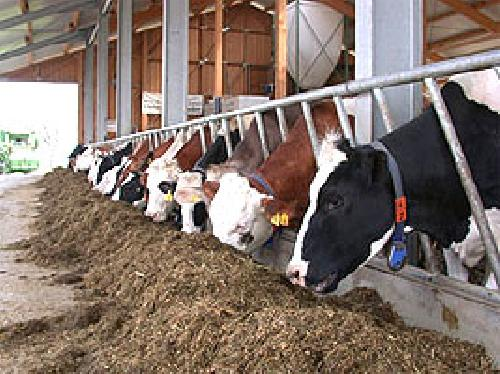 Německý systém k zajištění produkce kvalitního syrového mléka (1/2)